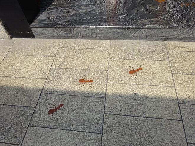台中宮原眼科入口のアリ